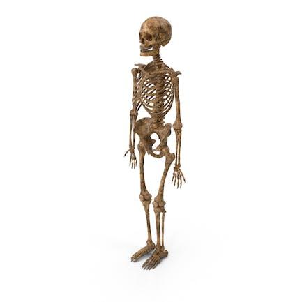 Esqueleto sucio