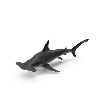 Gran tiburón martillo
