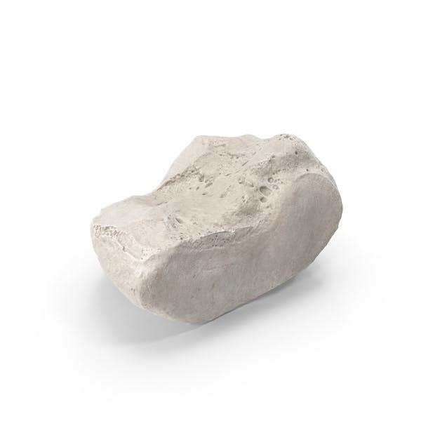 Medial Cuneiform Bone