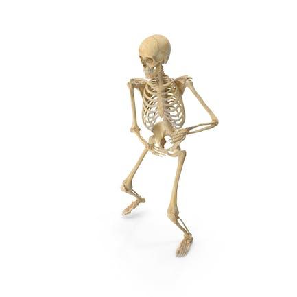 Real Humano Mujer Esqueleto Pose