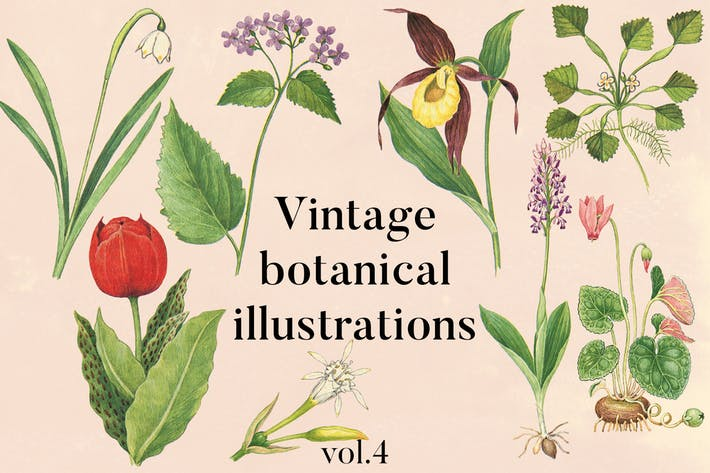 Thumbnail for Vintage botanische Illustrationen Vol.4