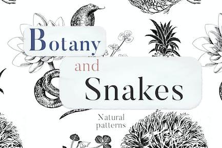 Botanik und Schlangen Natürliche Muster
