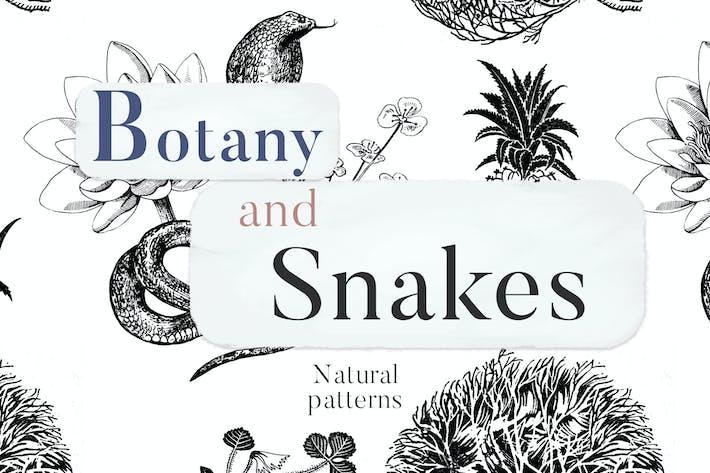 Thumbnail for Botany And Snakes Natural Patterns