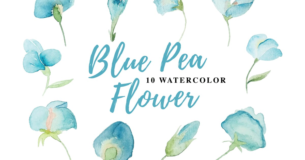 Download 10 Watercolor Blue Pea Flower Illustration by IanMikraz