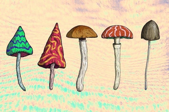 Magische Pilze Illustrationen