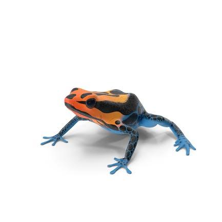 Amazonian Dart Frog