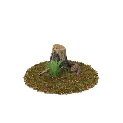 Stumpf mit Fels und Farn
