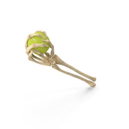 Скелет рука держит теннисный мяч