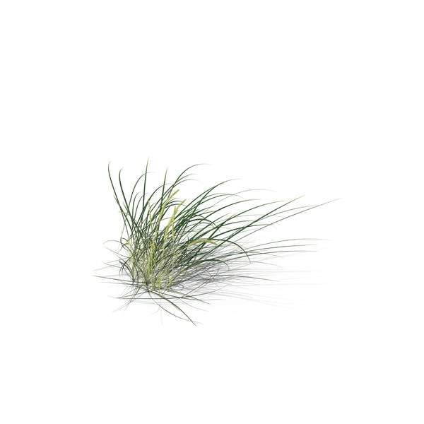 Thumbnail for Lyme Grass