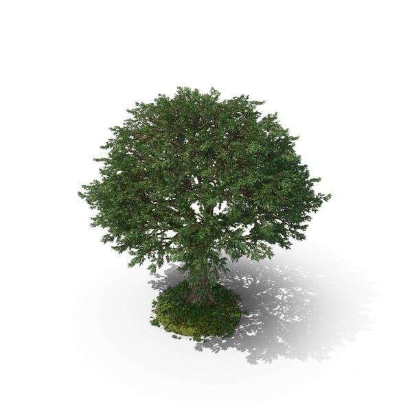 Baum mit Reben