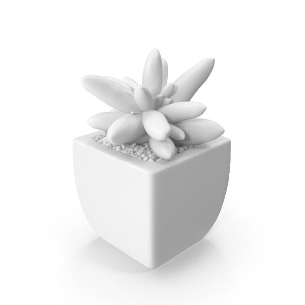 Thumbnail for Monochrome Succulent
