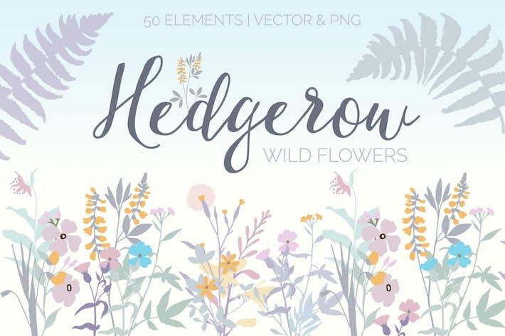 Hedgerow Wildblumen