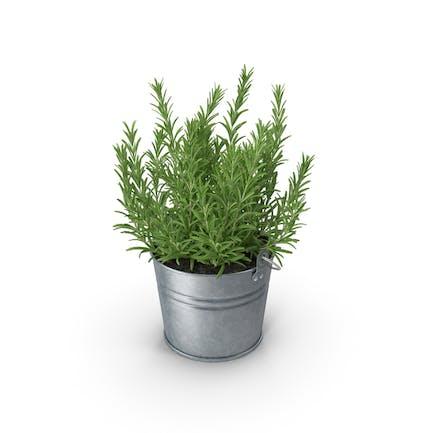 Rosemary Bucket