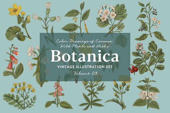 Thumbnail for Botanica Vol. 3 - Vintage Plants Illustrations