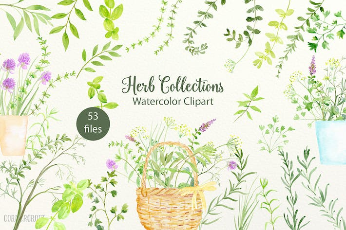 Thumbnail for Watercolor Herb Collection