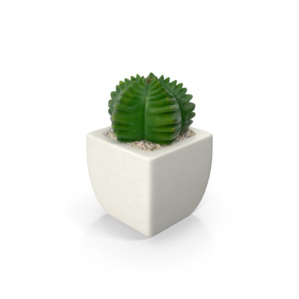 Thumbnail for Potted Succulent Plant