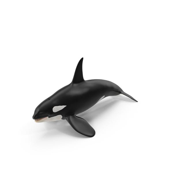 Cover Image for Killer Whale