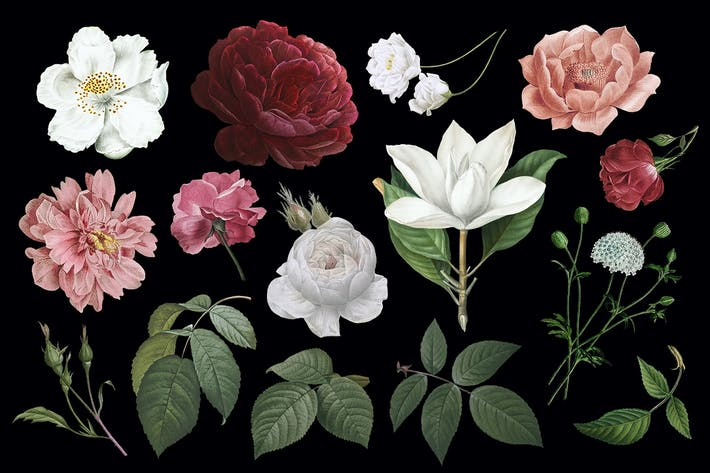Dibujos florales vintage