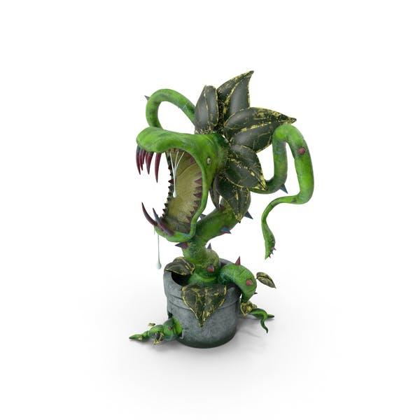 Carnivorous Plant Green