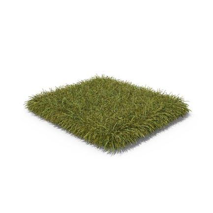 Grass Patch