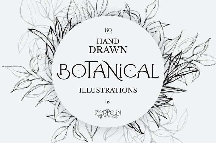 Thumbnail for 80 Botanical Hand Drawn Illustrations