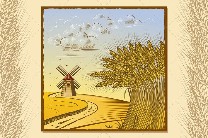 Cover Image For Wheat Fields