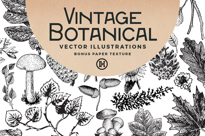 Thumbnail for Vintage Botanical Vector