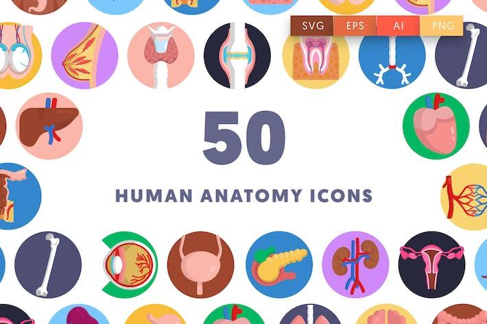 50 menschliche Anatomie-Symbole