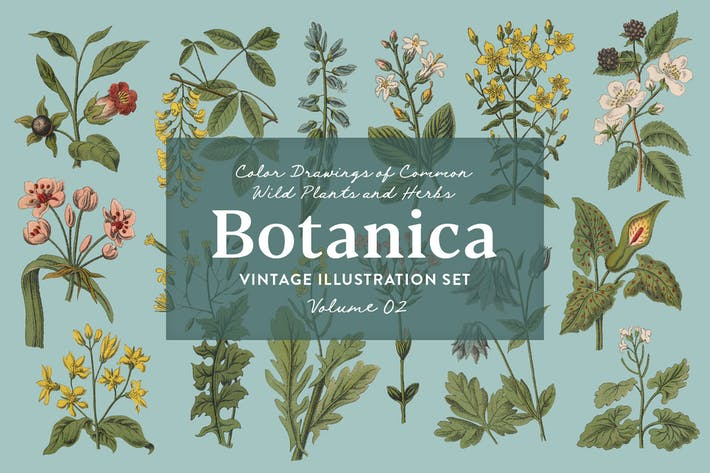 Botanica Vol. 2 - Vintage Plants Illustrations