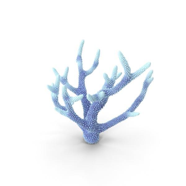 Коралловый белый