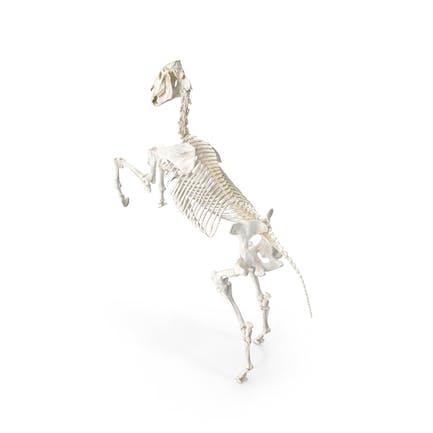 Esqueleto de Caballo