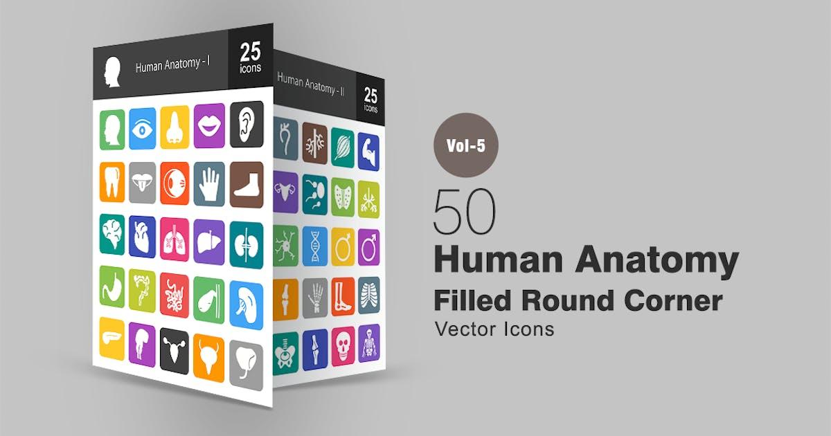 Download 50 Human Anatomy Flat Round Corner Icons by IconBunny