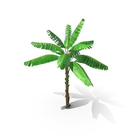 Tall Banana Tree