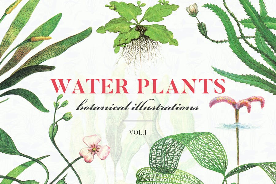 Water Plants Vol.1