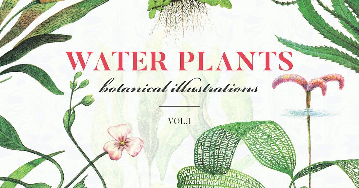 Download Water Plants Vol.1 by FreezeronMedia