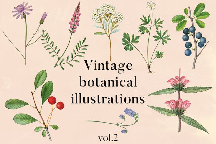 Thumbnail for Vintage botanische Illustrationen Vol.2