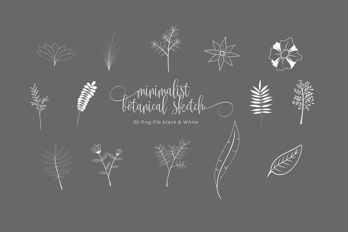 Thumbnail for Minimalist Botanical Sketches