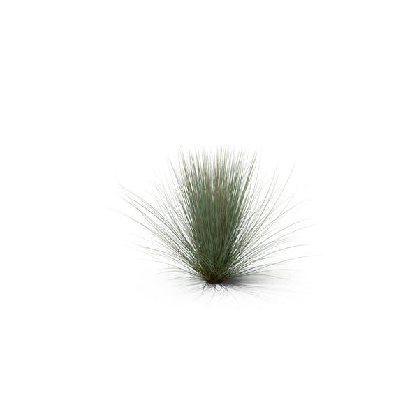Thumbnail for Beard Grass