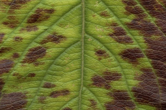 11 Leaves Texture Pack