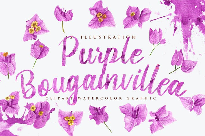 Thumbnail for 15 Watercolor Purple Bougainvillea Illustration