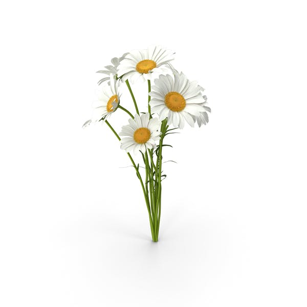 Thumbnail for Bouquet of Chamomile Flowers