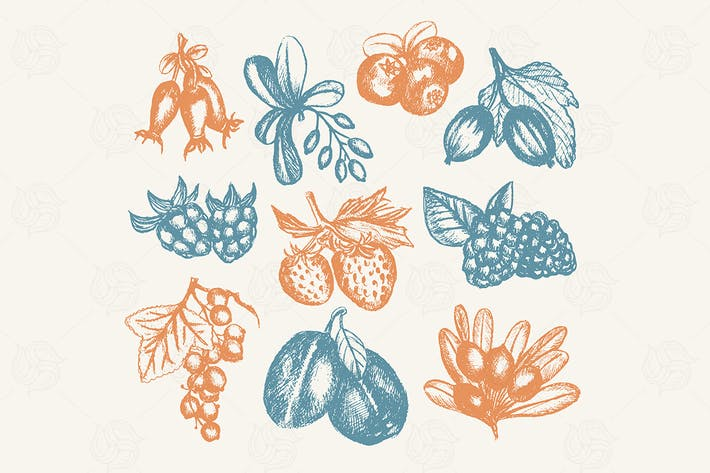 Thumbnail for Berries - vector hand drawn vintage illustration