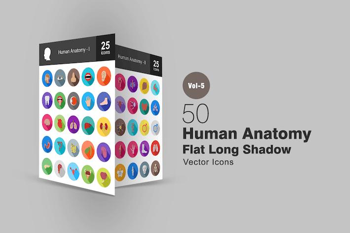 50 menschliche Anatomie Flache Shadowed Icons