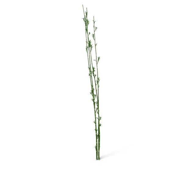 Thumbnail for Bamboo Reed