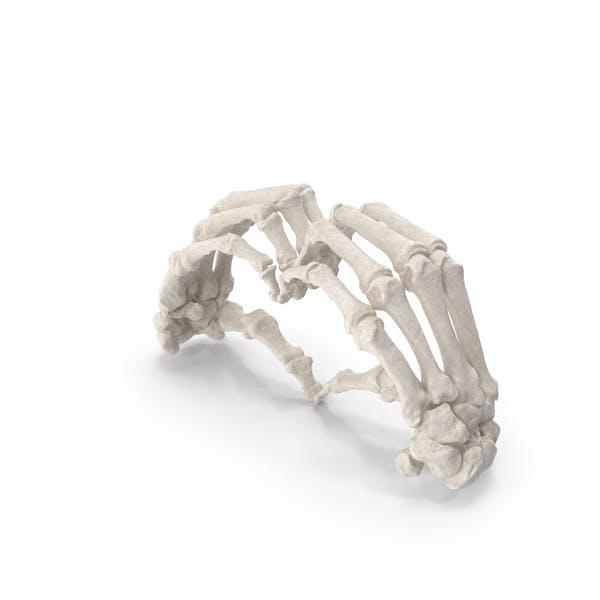 Thumbnail for Huesos de la mano humana signo de corazón blanco