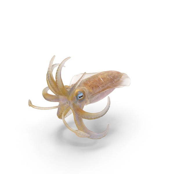 Cover Image for Squid