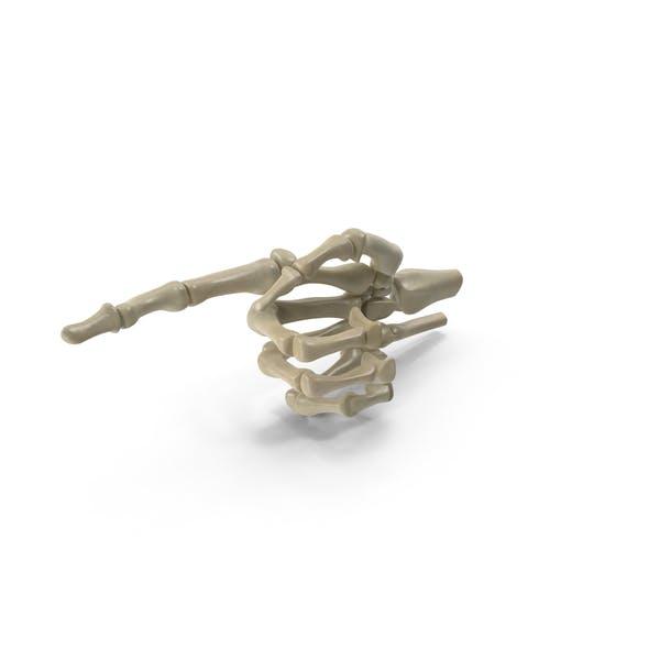 Thumbnail for Posed Skeletal Hand