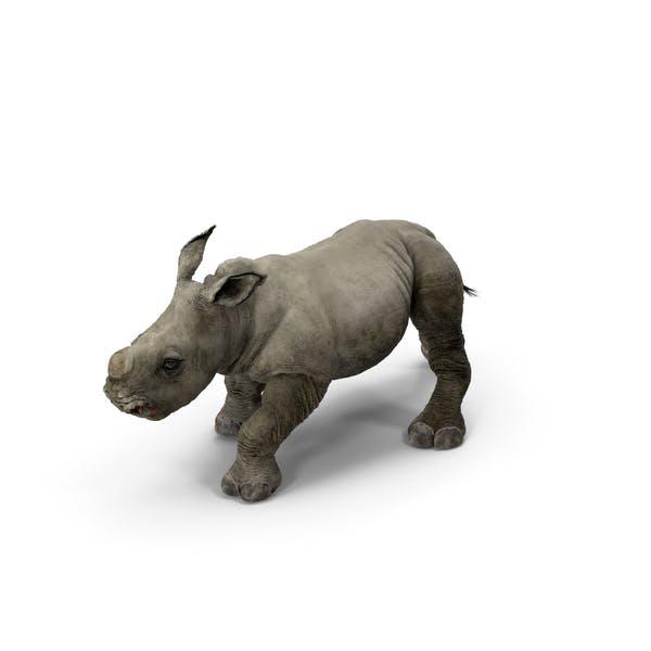 Rhino Baby Walking Pose