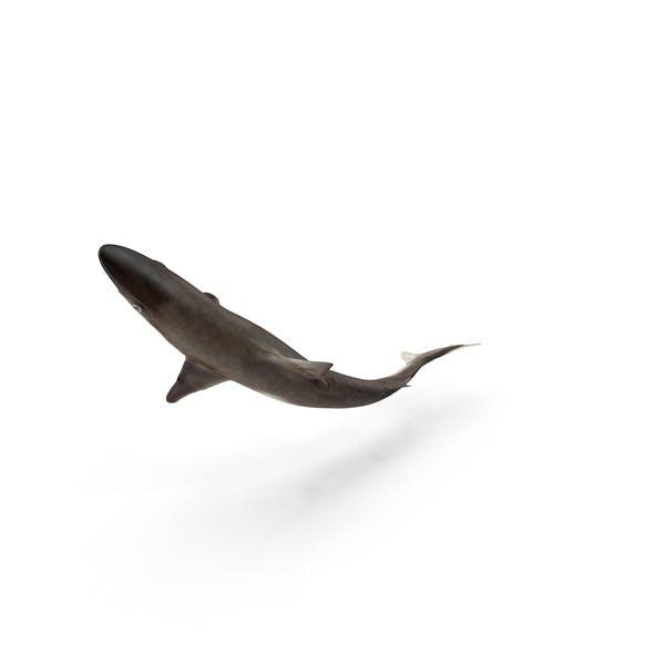 Thumbnail for School Shark