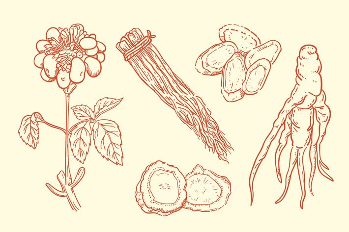 Thumbnail for Hand Drawn Ginseng Plant Collection